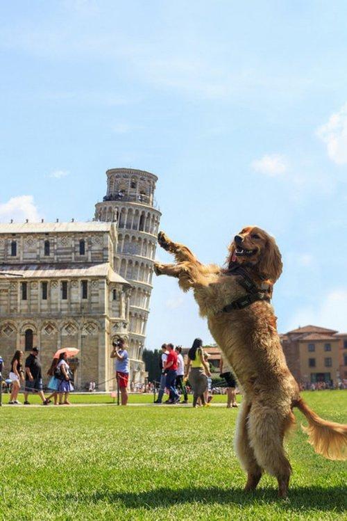Pisa Pup