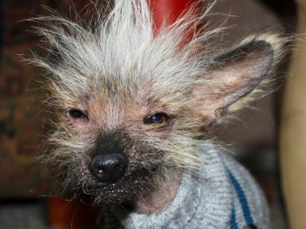 Dogs Bad Hair Day
