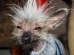 Ugly Dog 2