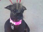 Ugly Dog 3