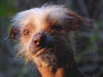 Ugly Dog 4