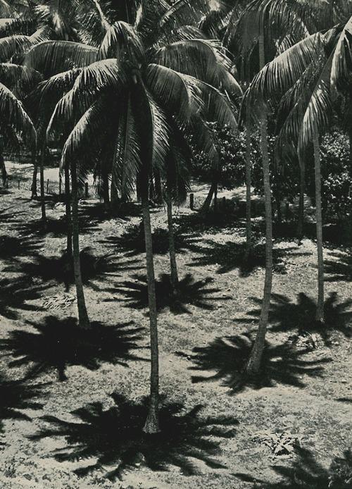 Noon at the equator