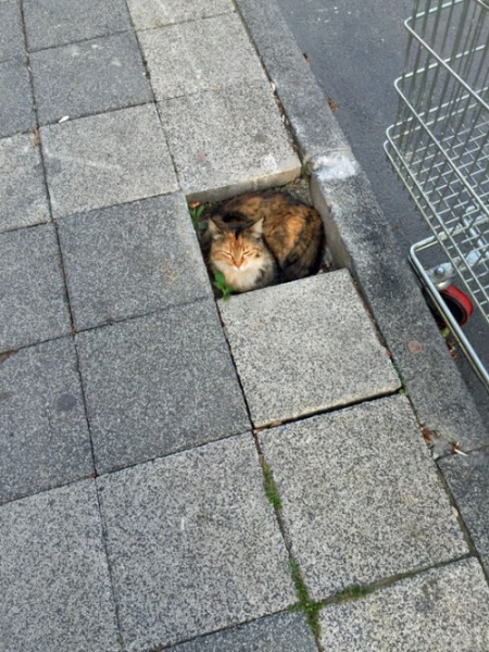 Cat Pavers