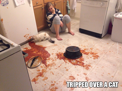 Tripped Over A Cat
