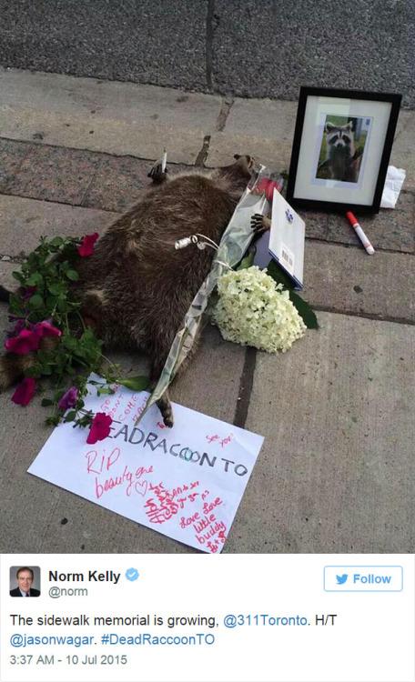 dead raccoon 3