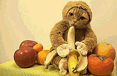 Still Life With Monkey [0]