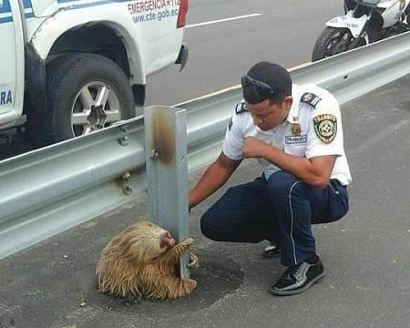 Speed Sloth