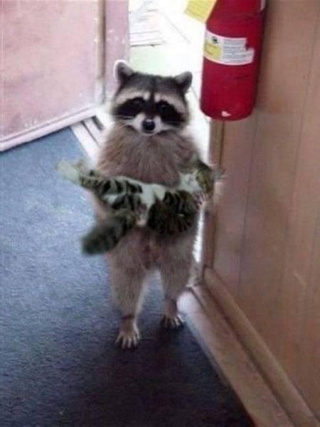 Racoon and Kitten
