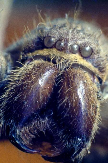Spider Love