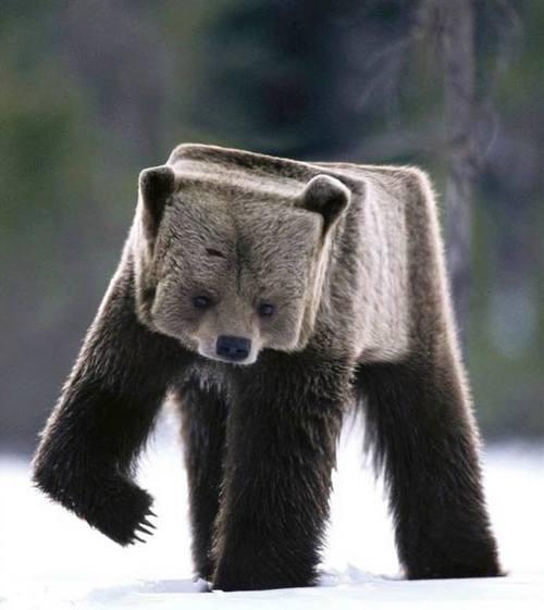 Cartesian Bear