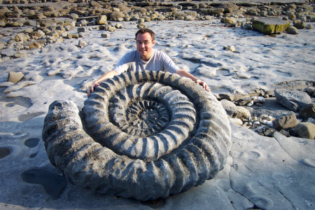 Ammonite Replica 2