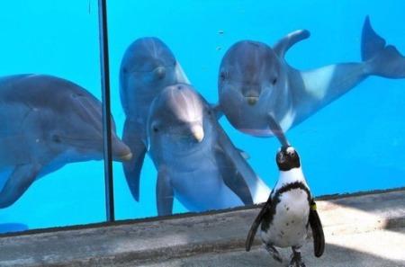 Dolphins Meet Penguin