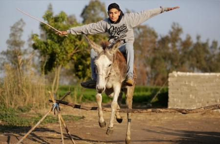 Egyptian Donkey Jump