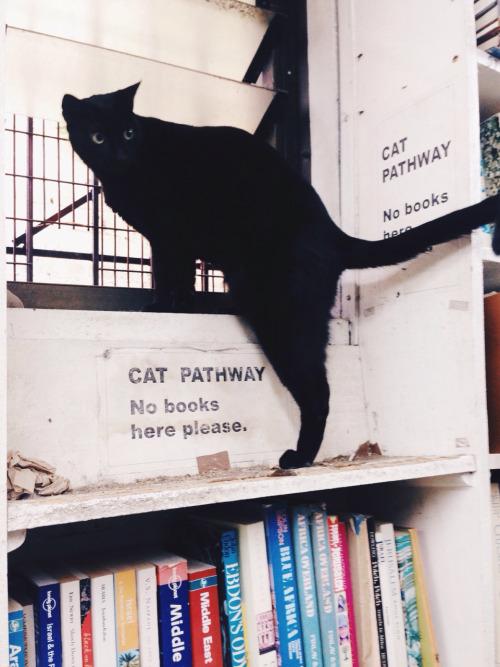 cat-pathological