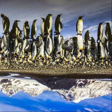 penguins-as-seen-from-the-northern-hemisphere