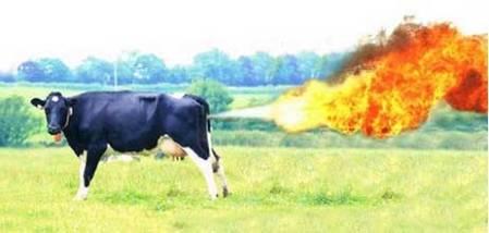 cow-farts