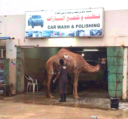 wash-your-camel