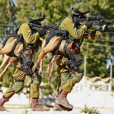 dog-squad