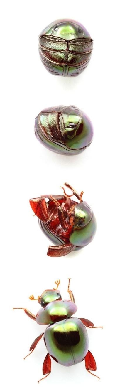 beetle-balls-1