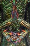 20000 Beetles 2