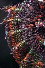 20000 Beetles 3