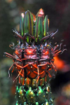 20000 Beetles 4