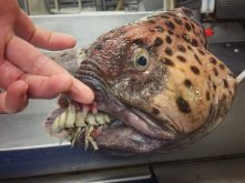 Nightmare Fish 2