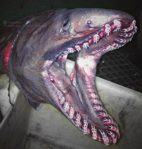 Nightmare Fish 3