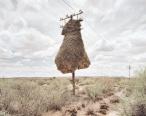 Weaverbird nest 1