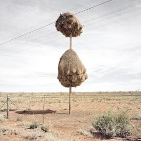 Weaverbird nest 10