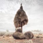 Weaverbird nest 11