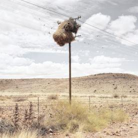 Weaverbird nest 2