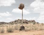 Weaverbird nest 5