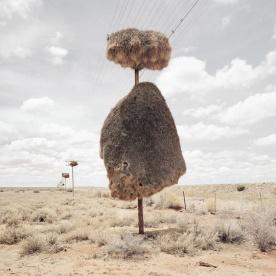 Weaverbird nest 7