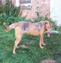 Panoramic Dog 1