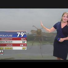 Mothra Forecast 2