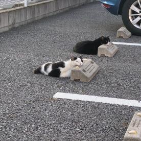 Cats & Wheelstops 1