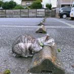 Cats & Wheelstops 10