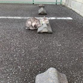 Cats & Wheelstops 11
