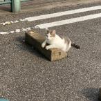 Cats & Wheelstops 12
