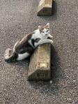 Cats & Wheelstops13