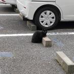 Cats & Wheelstops 2