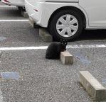 Cats & Wheelstops2