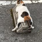 Cats & Wheelstops 3