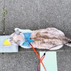 Cats & Wheelstops 4