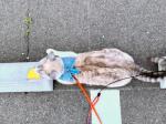 Cats & Wheelstops4