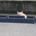 Cats & Wheelstops 5