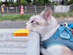 Cats & Wheelstops6