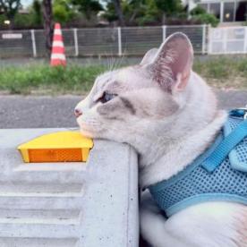 Cats & Wheelstops 6