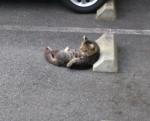 Cats & Wheelstops7